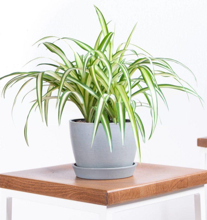 Mệnh kim nên bày những loại cây nào trong nhà thì hợp phong thủy? - Ảnh 3.