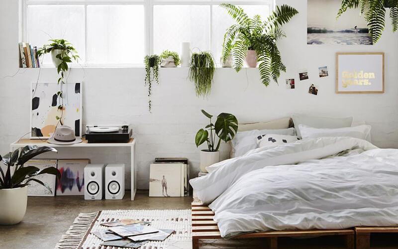 7 loại cây cảnh NÊN đặt trong phòng ngủ vừa tốt cho sức khỏe vừa hợp phong thủy