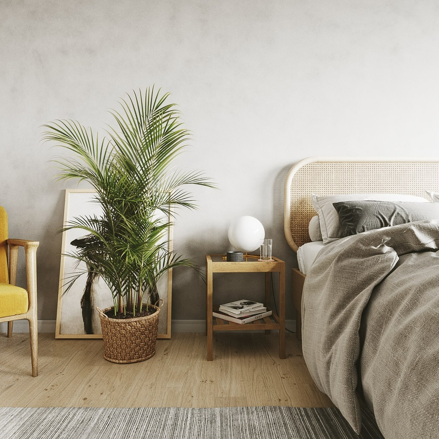 7 loại cây cảnh NÊN đặt trong phòng ngủ vừa tốt cho sức khỏe vừa hợp phong thủy - Ảnh 5.
