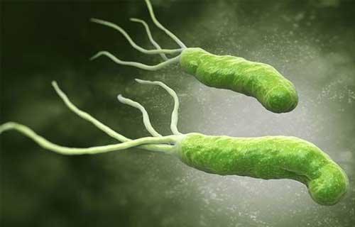 Thấy con xanh xao thiếu máu, đi khám mới biết cả nhà nhiễm loại vi khuẩn chết người - Ảnh 1.