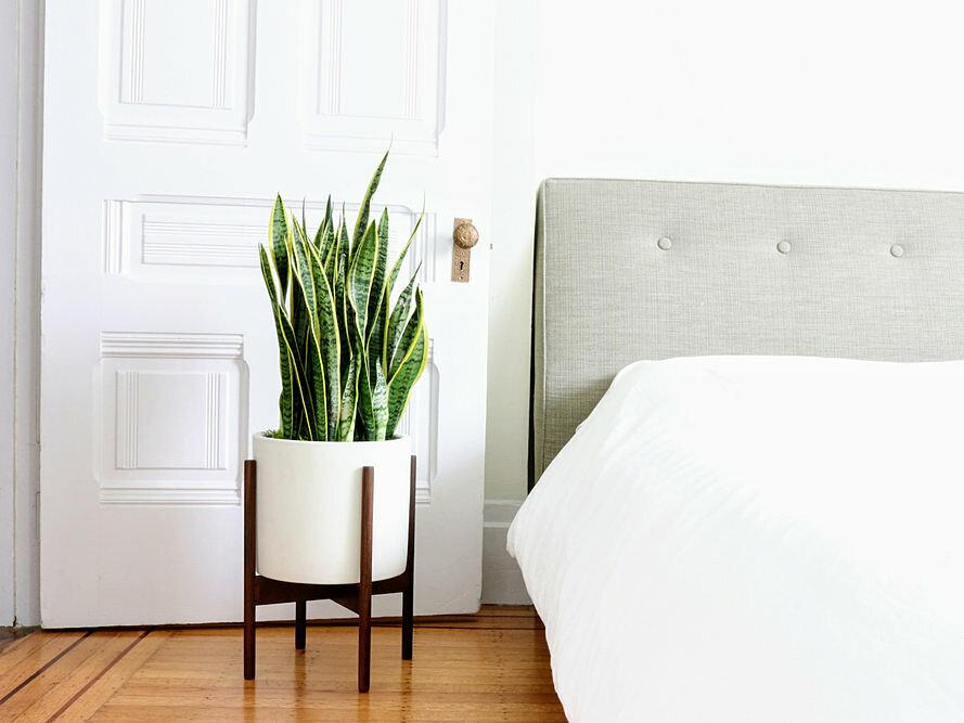 7 loại cây cảnh NÊN đặt trong phòng ngủ vừa tốt cho sức khỏe vừa hợp phong thủy - Ảnh 2.