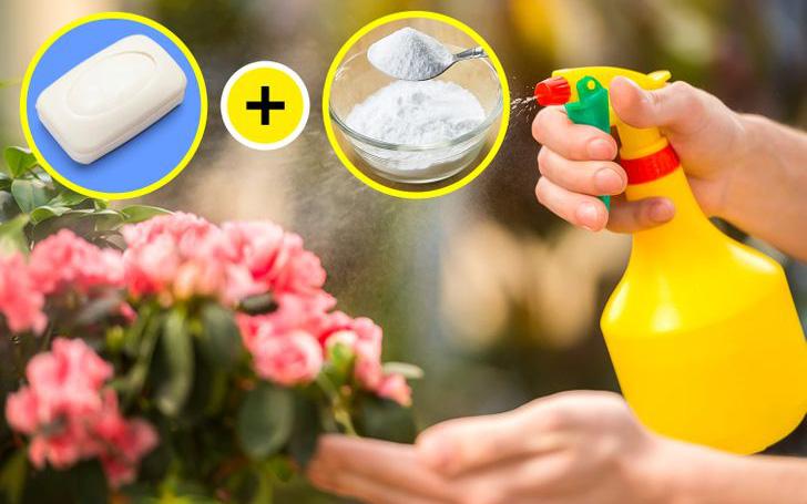 5 mẹo nhỏ với baking soda giúp khu vườn của bạn luôn xanh tốt
