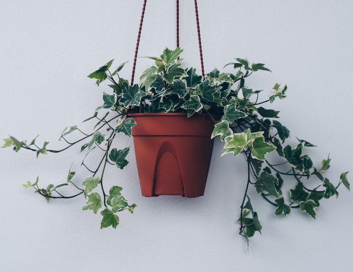 Những loại cây ít cần chăm sóc nhưng vẫn tươi xanh, đẹp mắt khi trồng trong nhà - Ảnh 1.