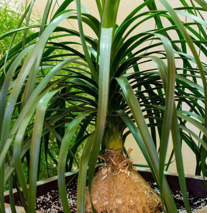 Những loại cây ít cần chăm sóc nhưng vẫn tươi xanh, đẹp mắt khi trồng trong nhà - Ảnh 7.