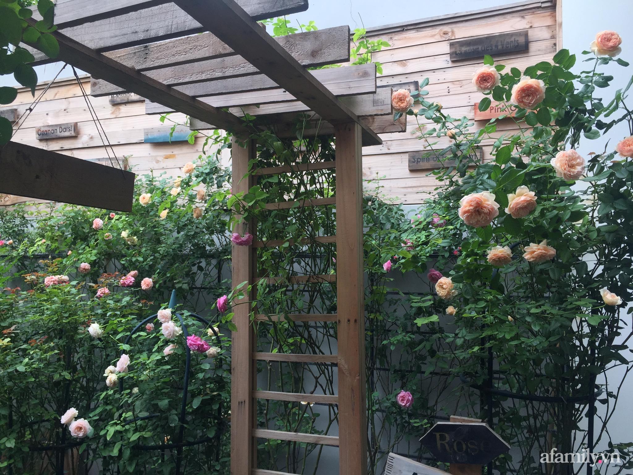 Vườn hồng rực rỡ tỏa sắc hương trước sân nhà đón hè sang của cặp vợ chồng trẻ Sải Gòn - Ảnh 3.