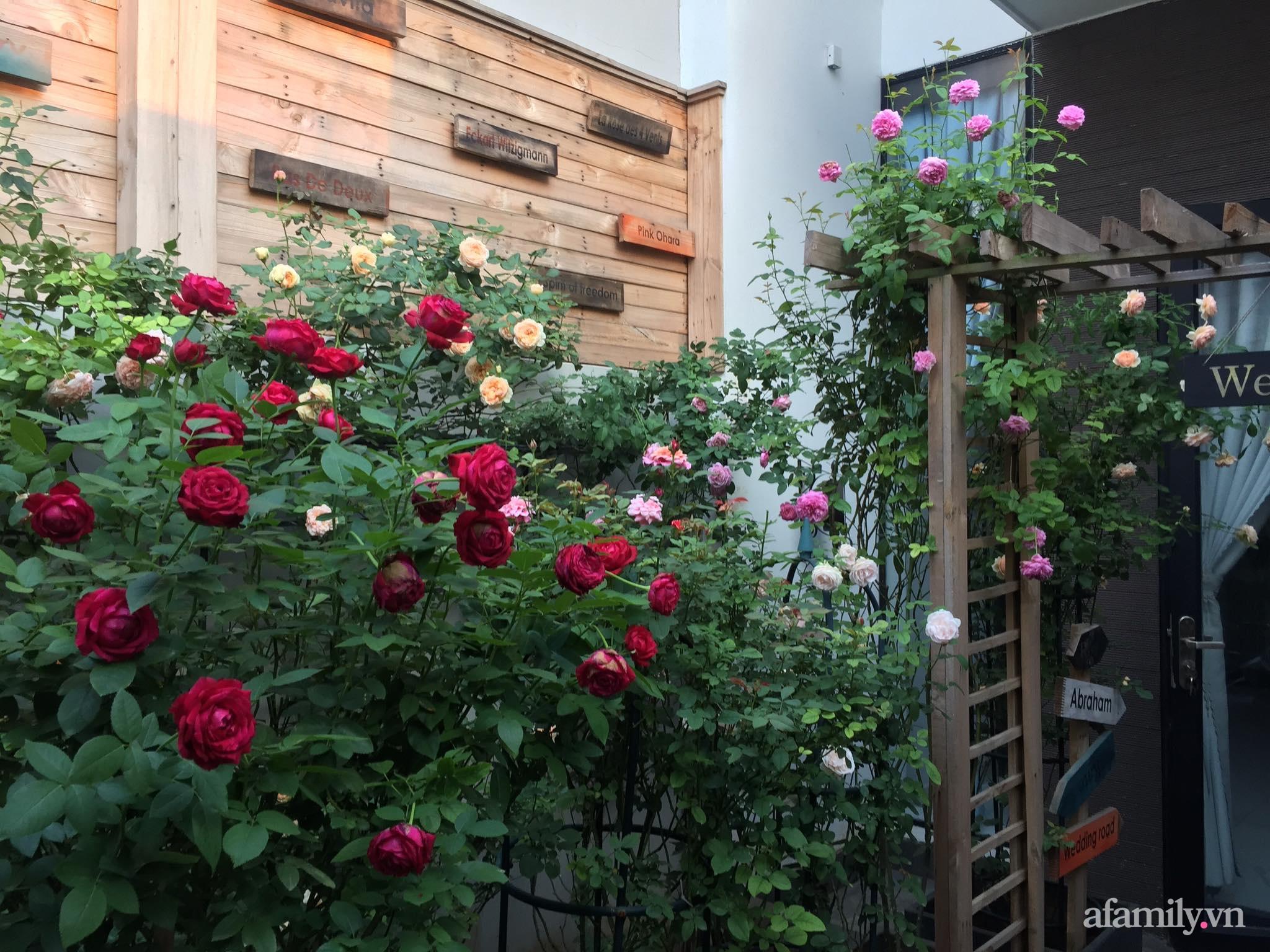 Vườn hồng rực rỡ tỏa sắc hương trước sân nhà đón hè sang của cặp vợ chồng trẻ Sải Gòn - Ảnh 5.