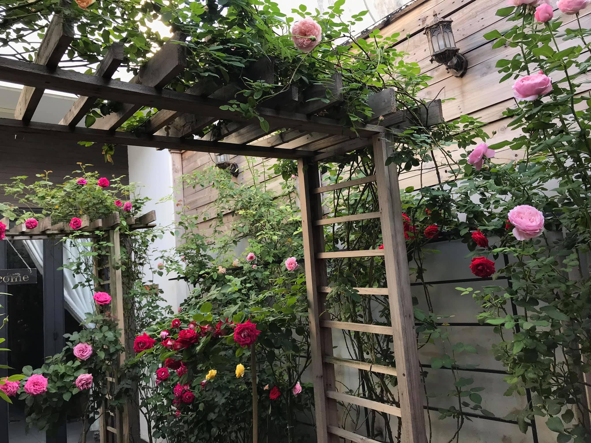 Vườn hồng rực rỡ tỏa sắc hương trước sân nhà đón hè sang của cặp vợ chồng trẻ Sải Gòn - Ảnh 9.