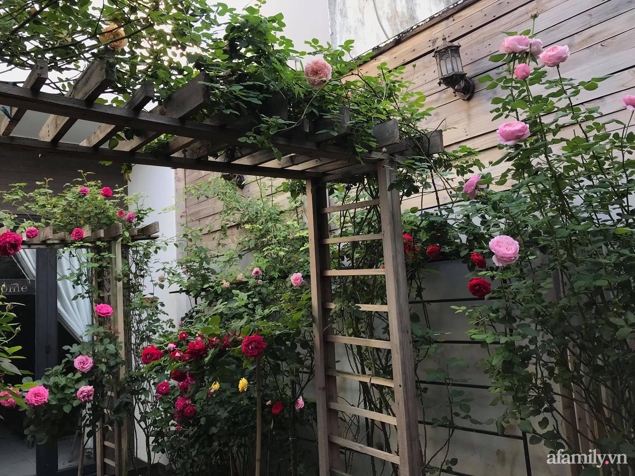 Vườn hồng rực rỡ tỏa sắc hương trước sân nhà đón hè sang của cặp vợ chồng trẻ Sải Gòn - Ảnh 2.
