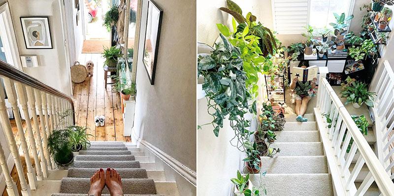 Hướng dẫn những vị trí đặt cây cảnh trong nhà tốt cho phong thủy - Ảnh 9.