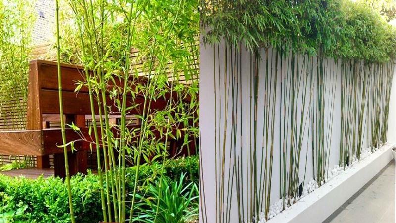 Hướng dẫn những vị trí đặt cây cảnh trong nhà tốt cho phong thủy - Ảnh 3.