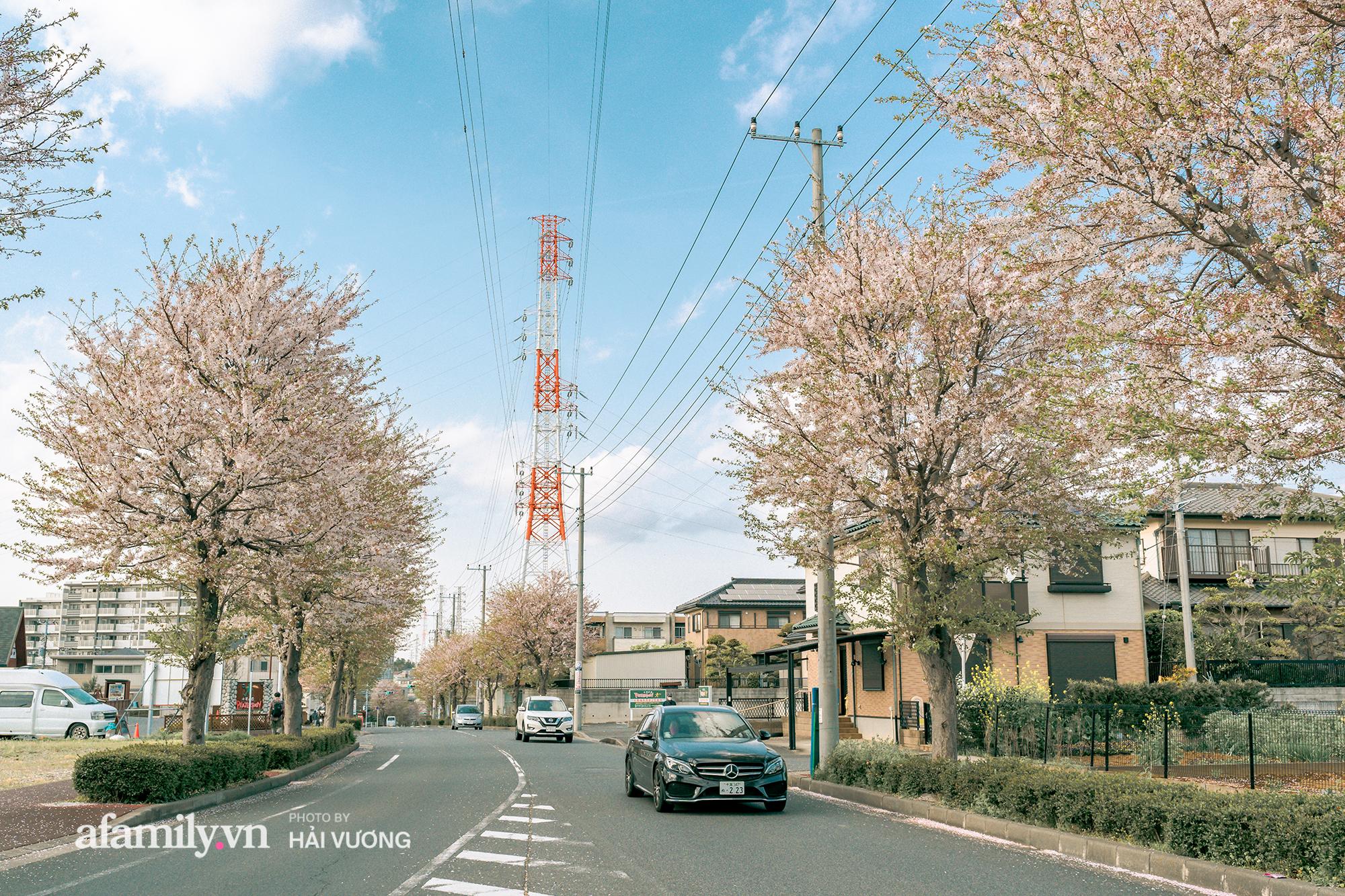 Đẹp ngây ngất cảnh tượng toàn bộ thủ đô Tokyo được bảo trùm trong sắc hoa anh đào nở sớm nhất trong 1.200 năm - Ảnh 10.