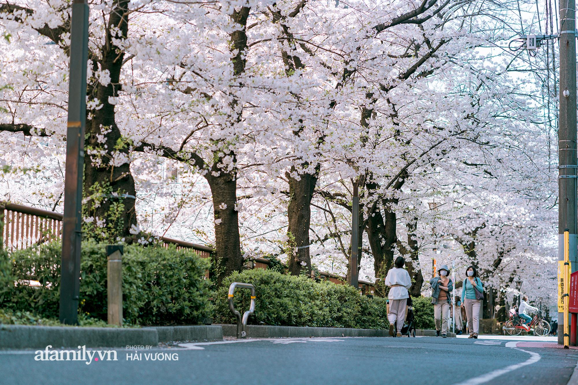 Đẹp ngây ngất cảnh tượng toàn bộ thủ đô Tokyo được bảo trùm trong sắc hoa anh đào nở sớm nhất trong 1.200 năm - Ảnh 7.