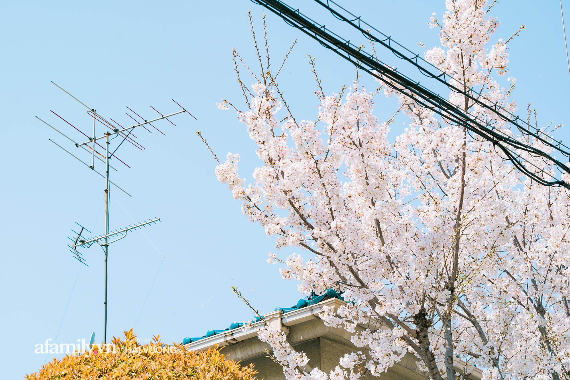 Đẹp ngây ngất cảnh tượng toàn bộ thủ đô Tokyo được bảo trùm trong sắc hoa anh đào nở sớm nhất trong 1.200 năm - Ảnh 9.