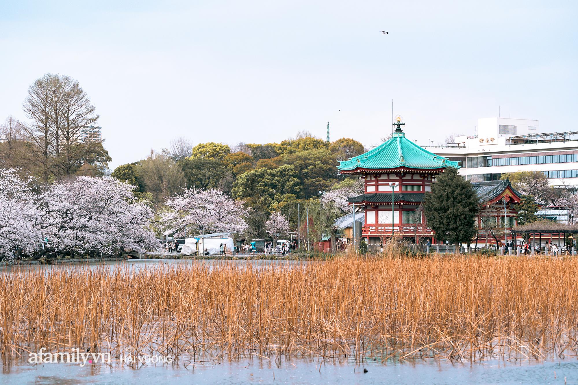 Đẹp ngây ngất cảnh tượng toàn bộ thủ đô Tokyo được bảo trùm trong sắc hoa anh đào nở sớm nhất trong 1.200 năm - Ảnh 13.