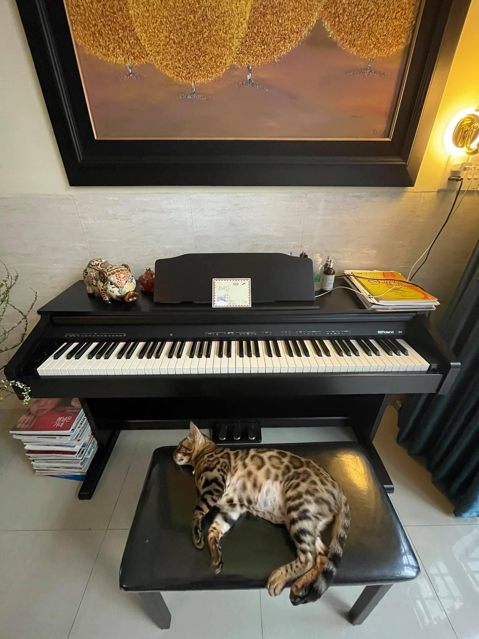 """Uyên Linh khoe nhà tối giản toàn tranh với mèo bình yên vô cùng, ai thích """"nghệ"""" cũng nên ngó qua thử xem! - Ảnh 4."""