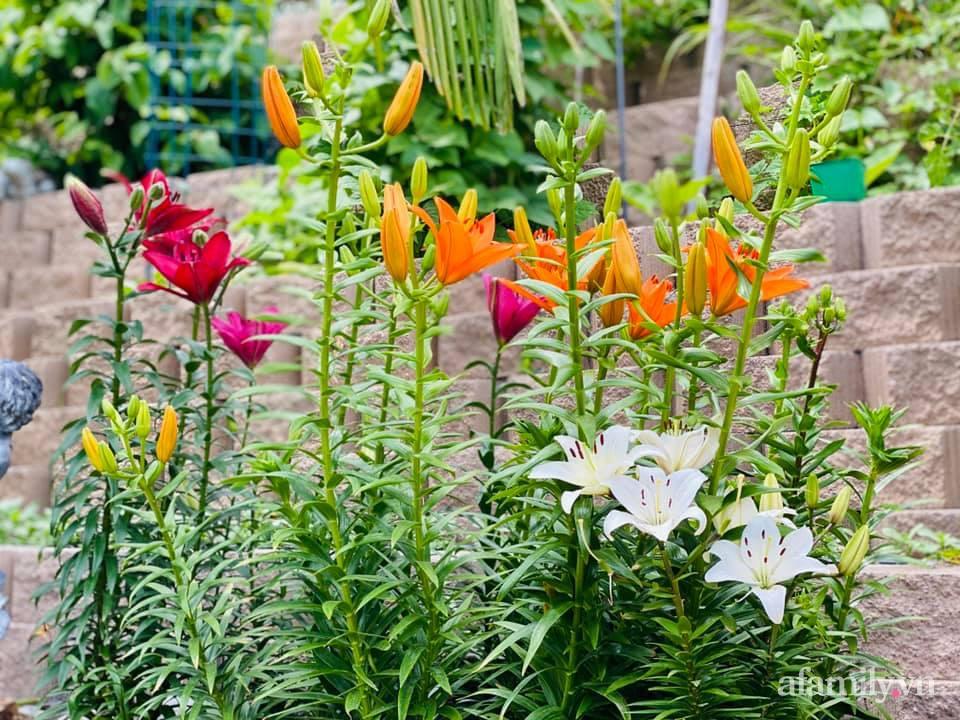 Khu vườn 750m² muôn hoa khoe sắc tỏa hương của mẹ Việt thức đêm chăm cây ở Mỹ - Ảnh 19.