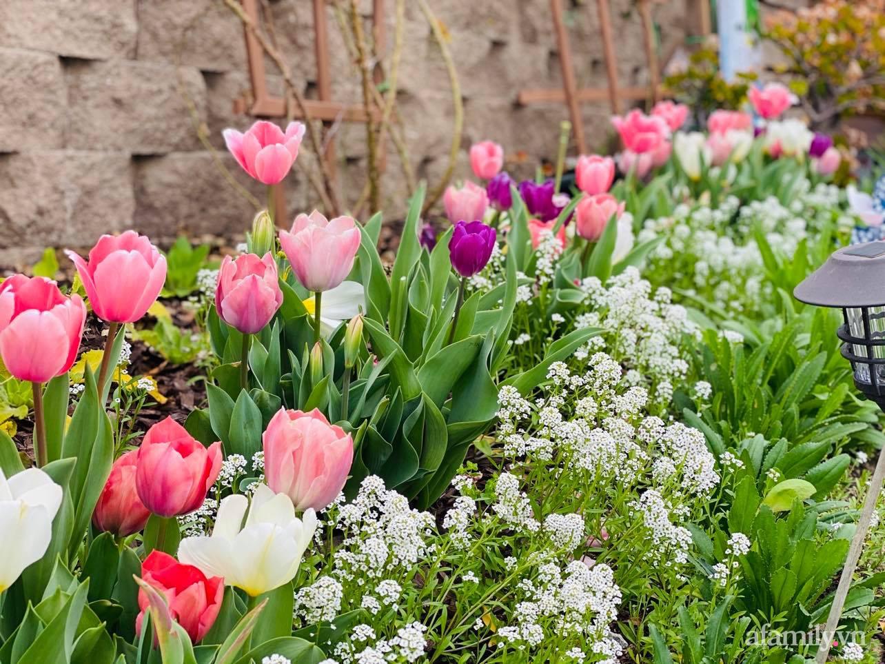 Khu vườn 750m² muôn hoa khoe sắc tỏa hương của mẹ Việt thức đêm chăm cây ở Mỹ - Ảnh 6.