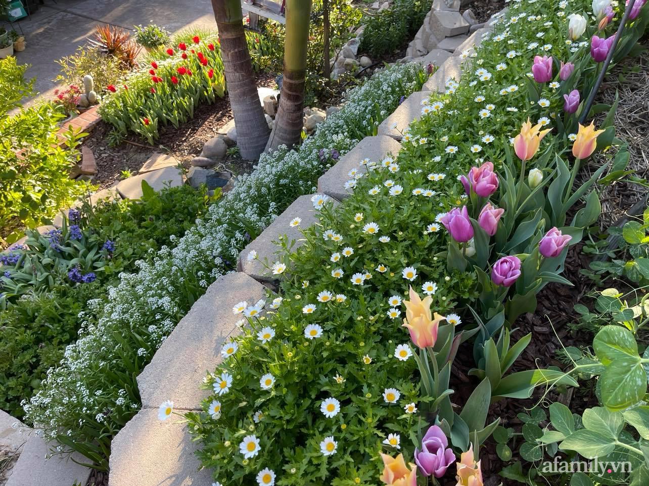 Khu vườn 750m² muôn hoa khoe sắc tỏa hương của mẹ Việt thức đêm chăm cây ở Mỹ - Ảnh 8.