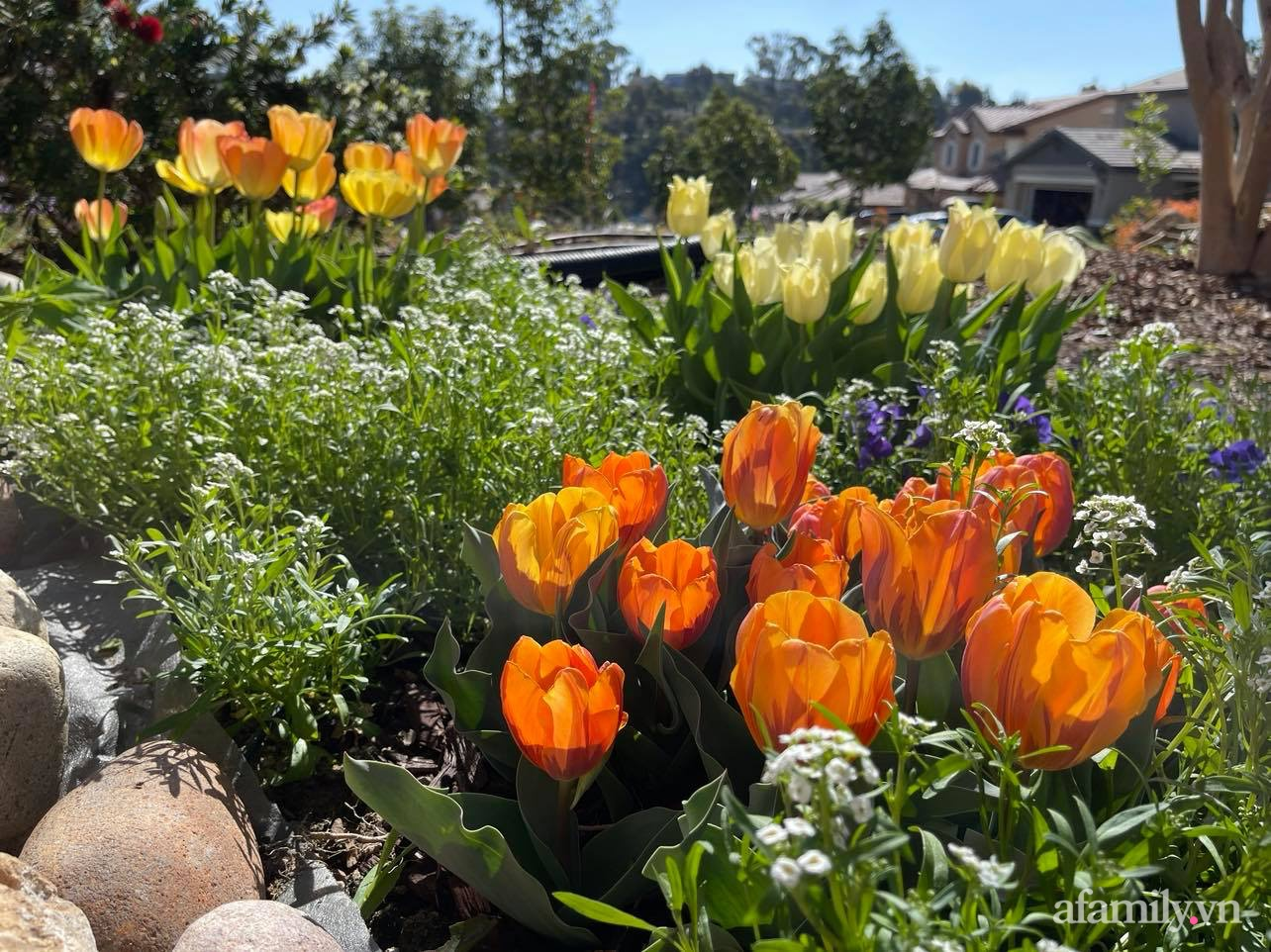 Khu vườn 750m² muôn hoa khoe sắc tỏa hương của mẹ Việt thức đêm chăm cây ở Mỹ - Ảnh 11.