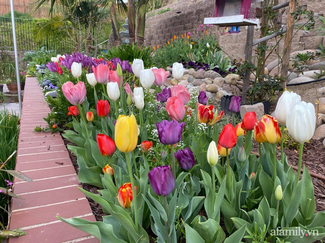 Khu vườn 750m² muôn hoa khoe sắc tỏa hương của mẹ Việt thức đêm chăm cây ở Mỹ - Ảnh 16.