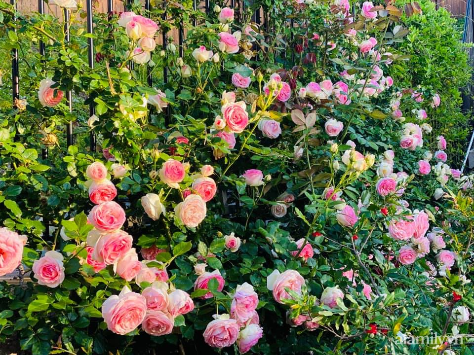 Khu vườn 750m² muôn hoa khoe sắc tỏa hương của mẹ Việt thức đêm chăm cây ở Mỹ - Ảnh 10.