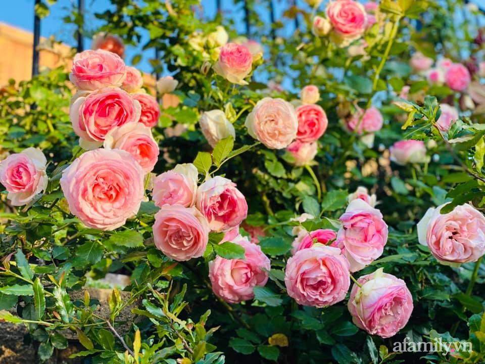 Khu vườn 750m² muôn hoa khoe sắc tỏa hương của mẹ Việt thức đêm chăm cây ở Mỹ - Ảnh 1.