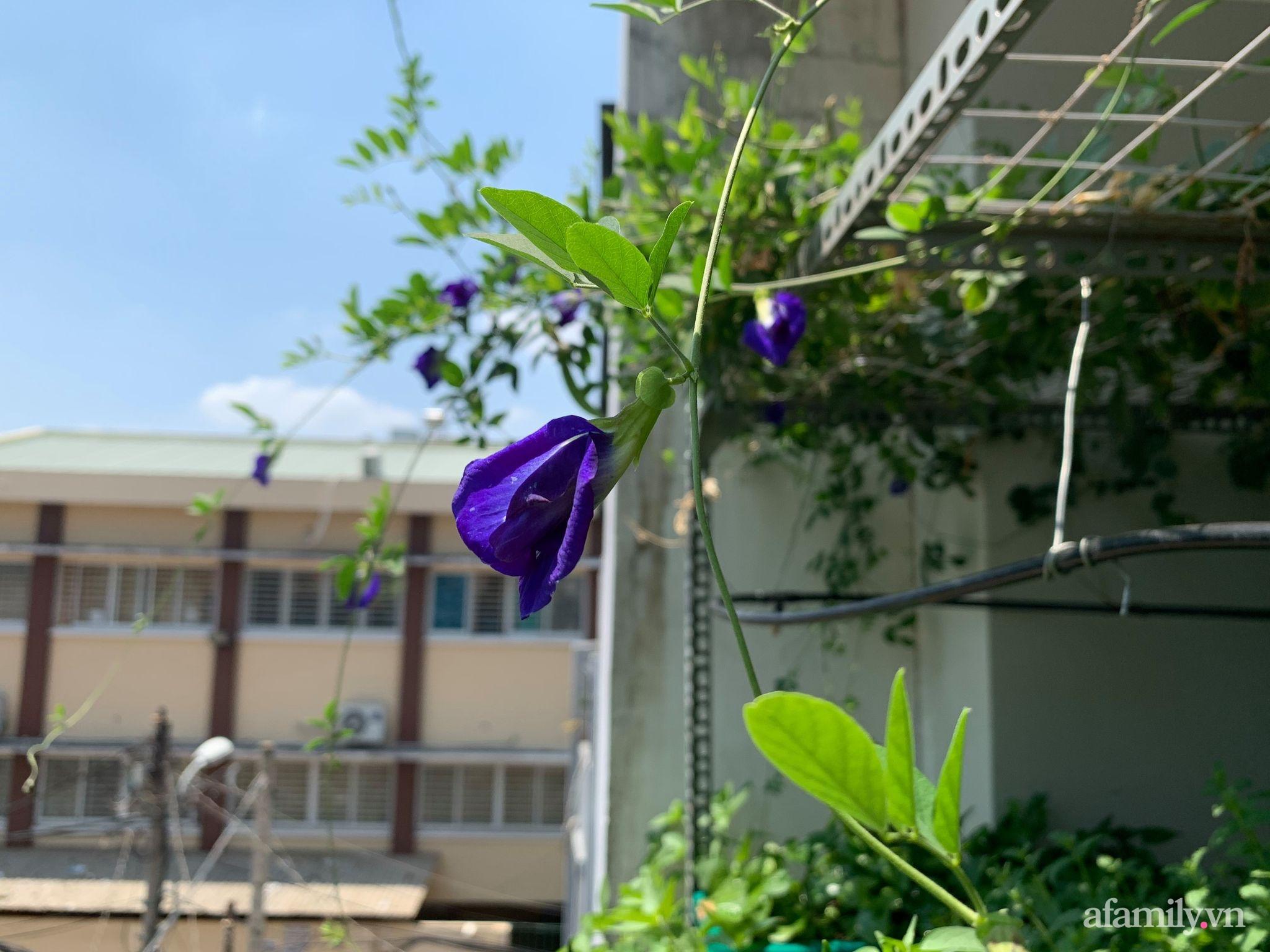 Ban công 3m² phủ kín rau sạch quanh năm tươi tốt của ông bố đảm 3 con ở Bình Thạnh, Sài Gòn - Ảnh 12.