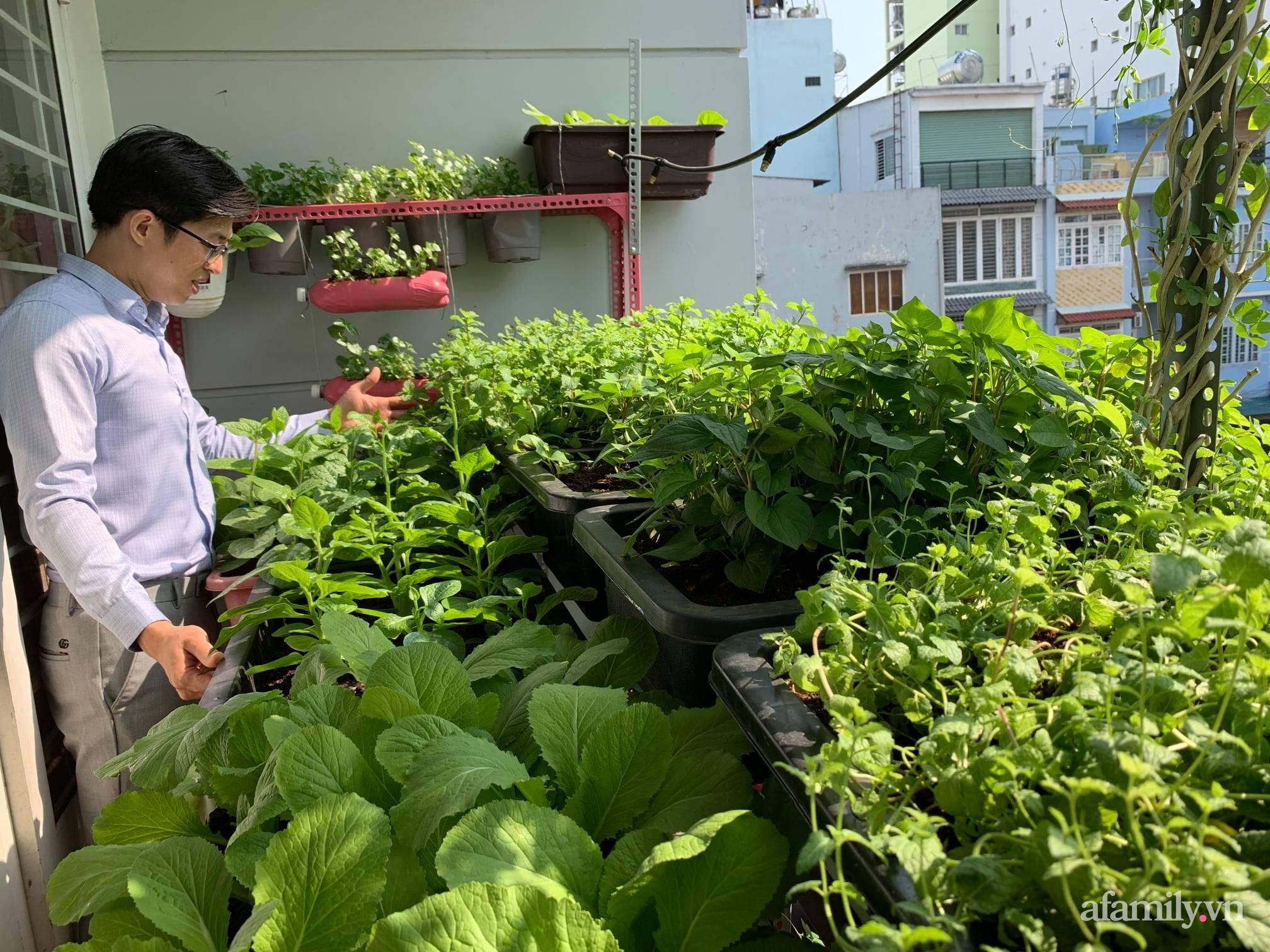 Ban công 3m² phủ kín rau sạch quanh năm tươi tốt của ông bố đảm 3 con ở Bình Thạnh, Sài Gòn - Ảnh 1.
