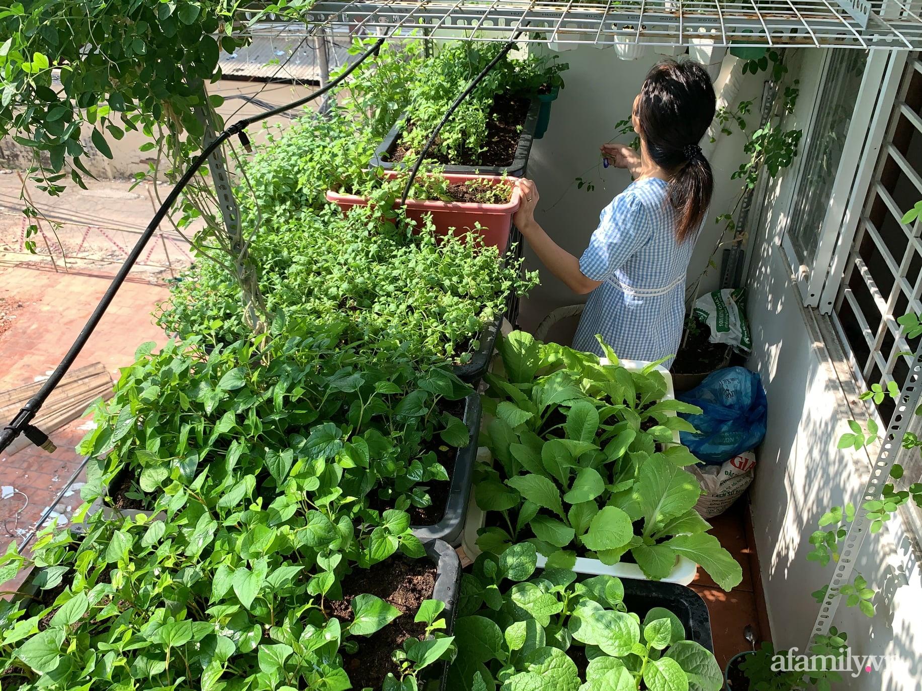 Ban công 3m² phủ kín rau sạch quanh năm tươi tốt của ông bố đảm 3 con ở Bình Thạnh, Sài Gòn - Ảnh 2.