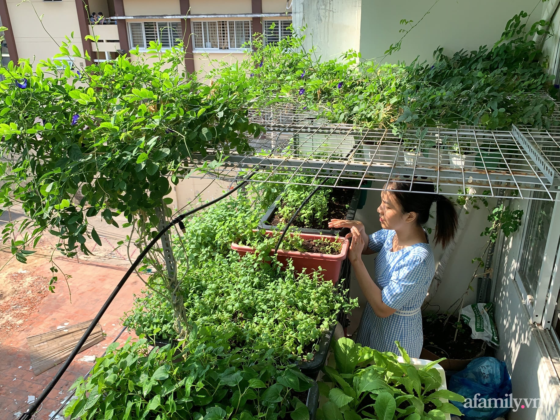 Ban công 3m² phủ kín rau sạch quanh năm tươi tốt của ông bố đảm 3 con ở Bình Thạnh, Sài Gòn - Ảnh 3.
