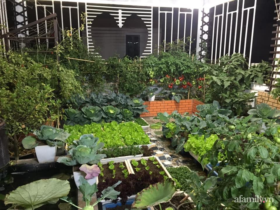 Mong muốn vợ con được ăn thực phẩm sạch, ông bố trẻ vất vả phủ kín rau sạch trên sân thượng 70m² ở Hà Nội - Ảnh 3.
