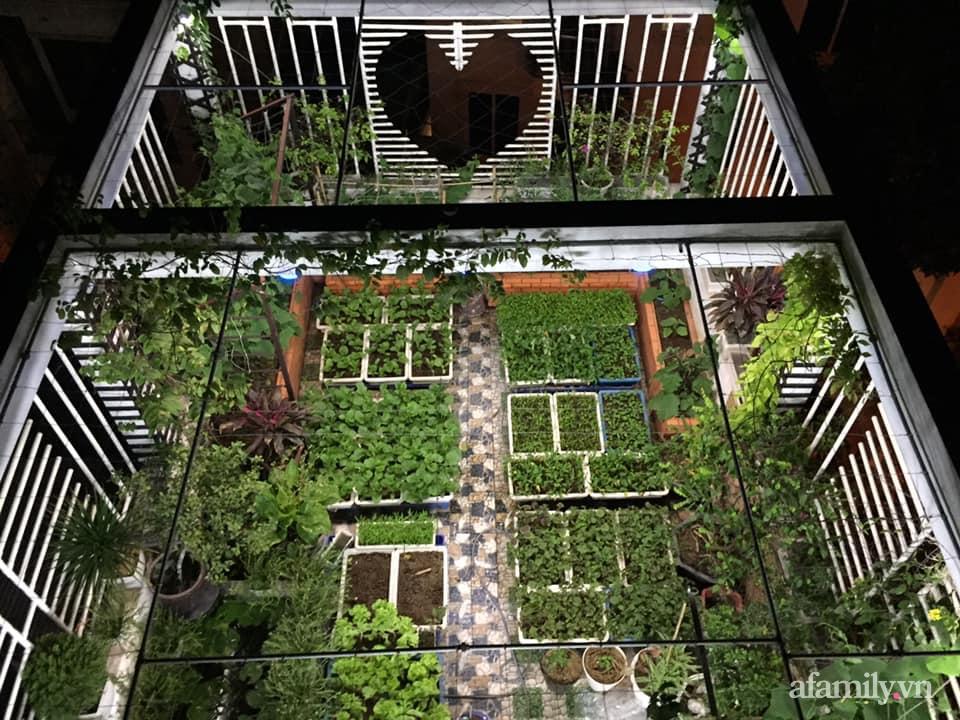 Mong muốn vợ con được ăn thực phẩm sạch, ông bố trẻ vất vả phủ kín rau sạch trên sân thượng 70m² ở Hà Nội - Ảnh 1.