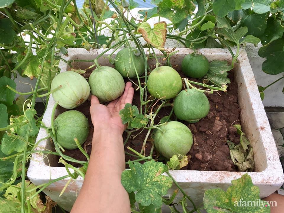 Mong muốn vợ con được ăn thực phẩm sạch, ông bố trẻ vất vả phủ kín rau sạch trên sân thượng 70m² ở Hà Nội - Ảnh 10.