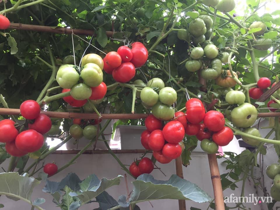 Mong muốn vợ con được ăn thực phẩm sạch, ông bố trẻ vất vả phủ kín rau sạch trên sân thượng 70m² ở Hà Nội - Ảnh 12.