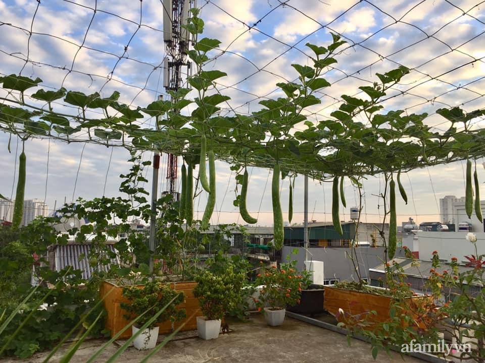 Mong muốn vợ con được ăn thực phẩm sạch, ông bố trẻ vất vả phủ kín rau sạch trên sân thượng 70m² ở Hà Nội - Ảnh 5.