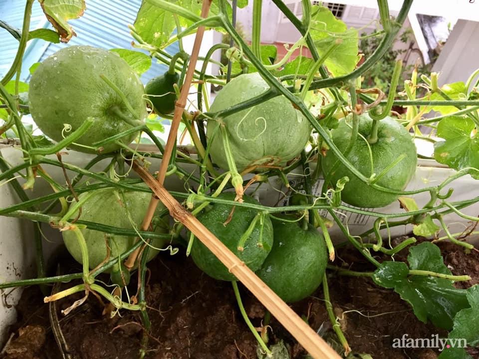 Mong muốn vợ con được ăn thực phẩm sạch, ông bố trẻ vất vả phủ kín rau sạch trên sân thượng 70m² ở Hà Nội - Ảnh 8.