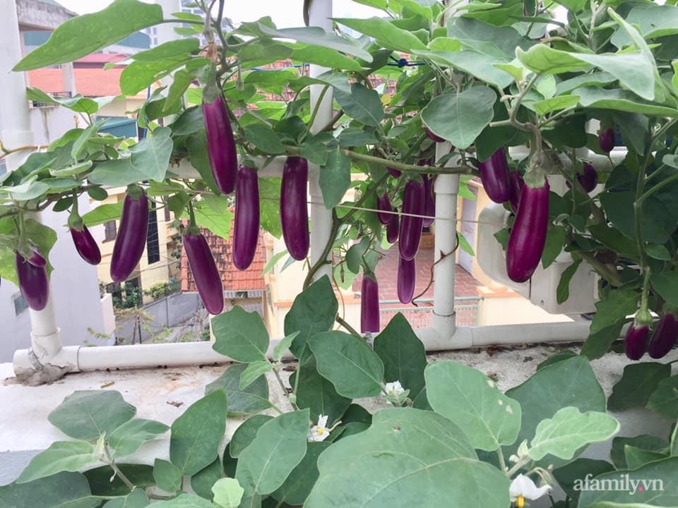 Mong muốn vợ con được ăn thực phẩm sạch, ông bố trẻ vất vả phủ kín rau sạch trên sân thượng 70m² ở Hà Nội - Ảnh 17.