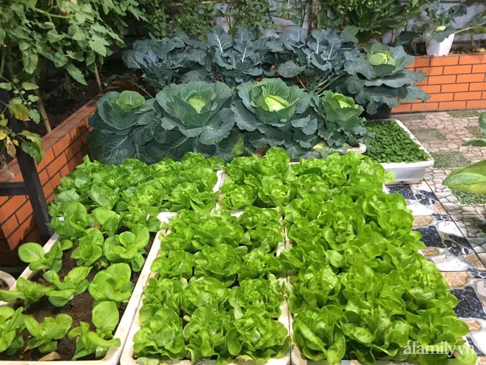 Mong muốn vợ con được ăn thực phẩm sạch, ông bố trẻ vất vả phủ kín rau sạch trên sân thượng 70m² ở Hà Nội - Ảnh 14.