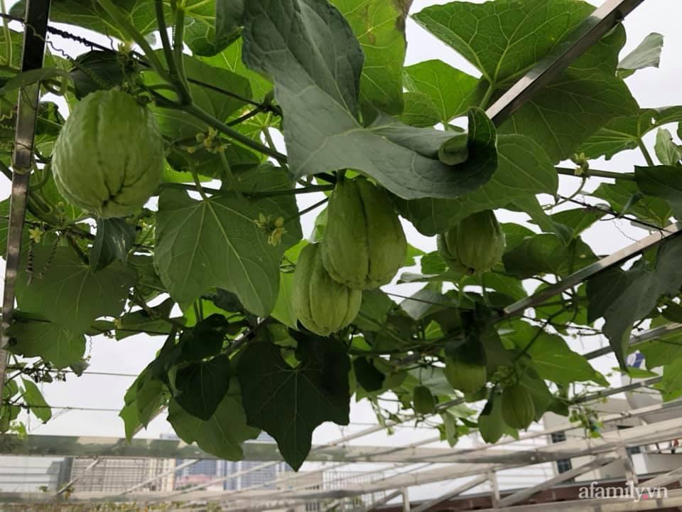 Vườn rau quả sạch 100m2 trên mái nhà của người phụ nữ xinh đẹp ở Hà Nội - Ảnh 12.