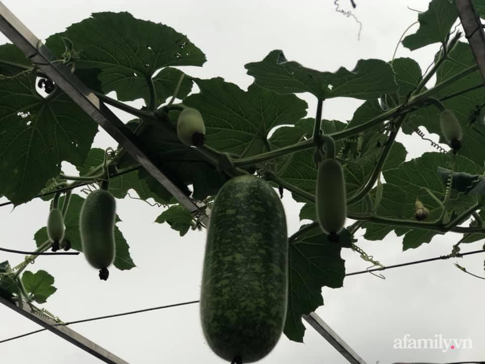 Vườn rau quả sạch 100m2 trên mái nhà của người phụ nữ xinh đẹp ở Hà Nội - Ảnh 14.