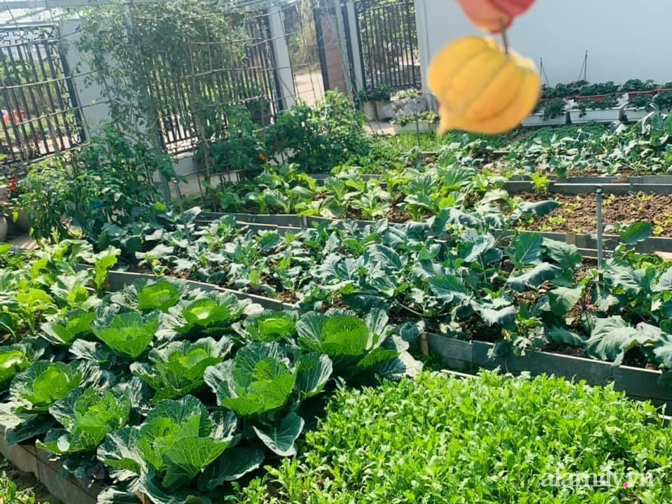 """""""Nông trại"""" rộng 300m2 đẹp như cổ tích với đủ loại hoa và rau quả của mẹ 4 con ở Móng Cái, Quảng Ninh - Ảnh 4."""