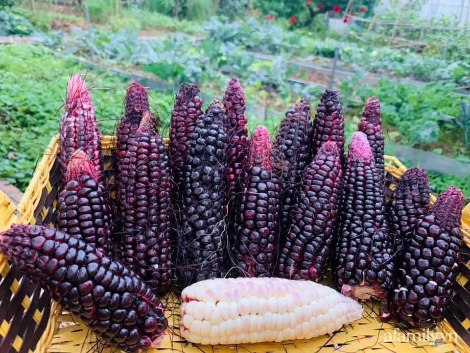 """""""Nông trại"""" rộng 300m2 đẹp như cổ tích với đủ loại hoa và rau quả của mẹ 4 con ở Móng Cái, Quảng Ninh - Ảnh 11."""