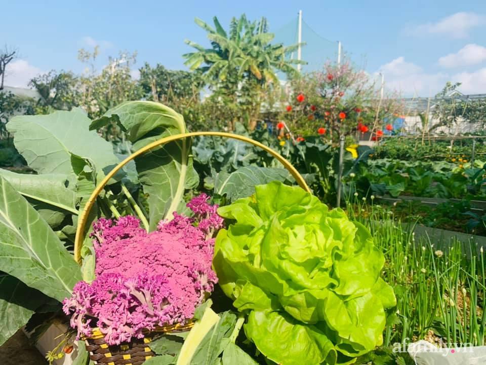 """""""Nông trại"""" rộng 300m2 đẹp như cổ tích với đủ loại hoa và rau quả của mẹ 4 con ở Móng Cái, Quảng Ninh - Ảnh 13."""