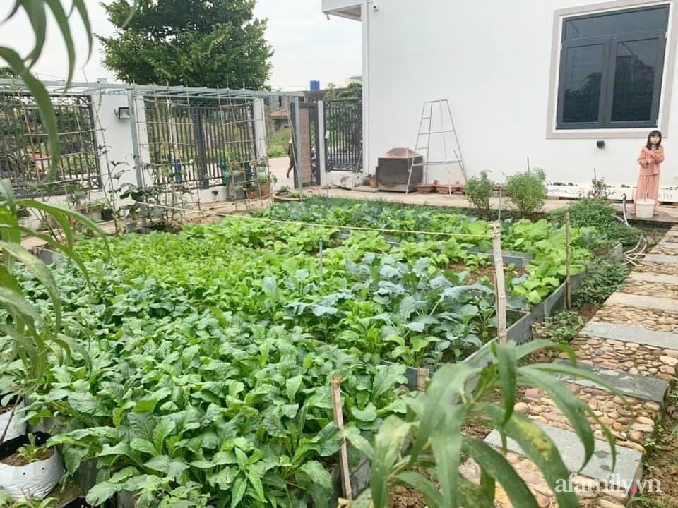 """""""Nông trại"""" rộng 300m2 đẹp như cổ tích với đủ loại hoa và rau quả của mẹ 4 con ở Móng Cái, Quảng Ninh - Ảnh 3."""