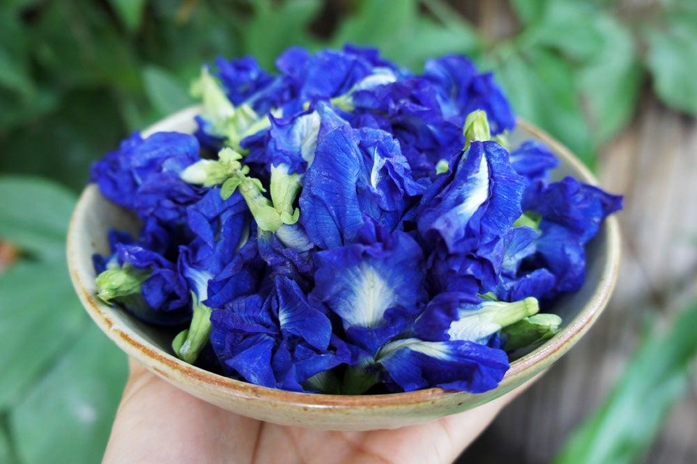 Thứ hoa rụng đầy bờ rào giờ được tiểu thương chợ mạng bán giá gần nửa triệu đồng/kg - Ảnh 2.