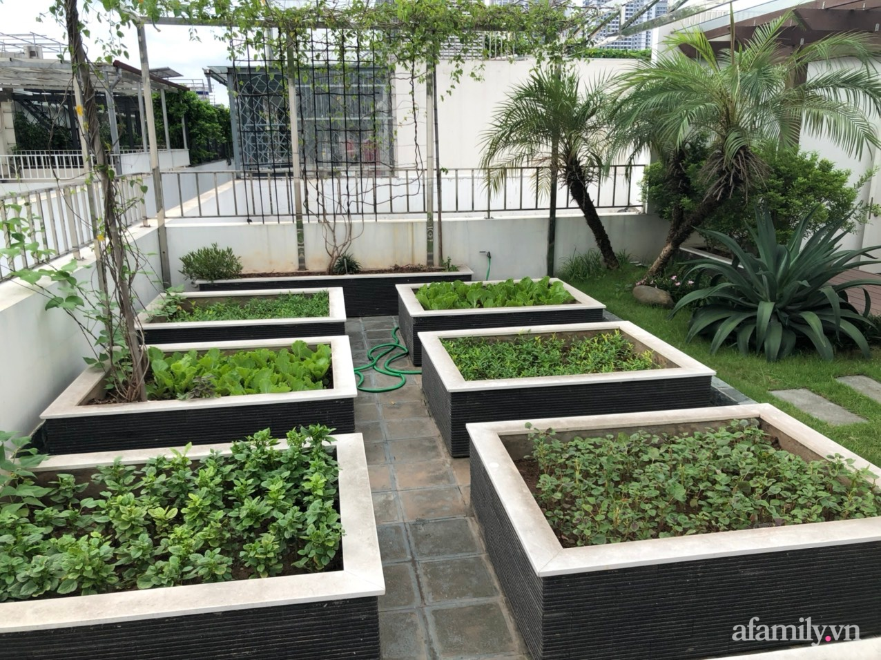 Vườn rau quả sạch 100m2 trên mái nhà của người phụ nữ xinh đẹp ở Hà Nội - Ảnh 2.