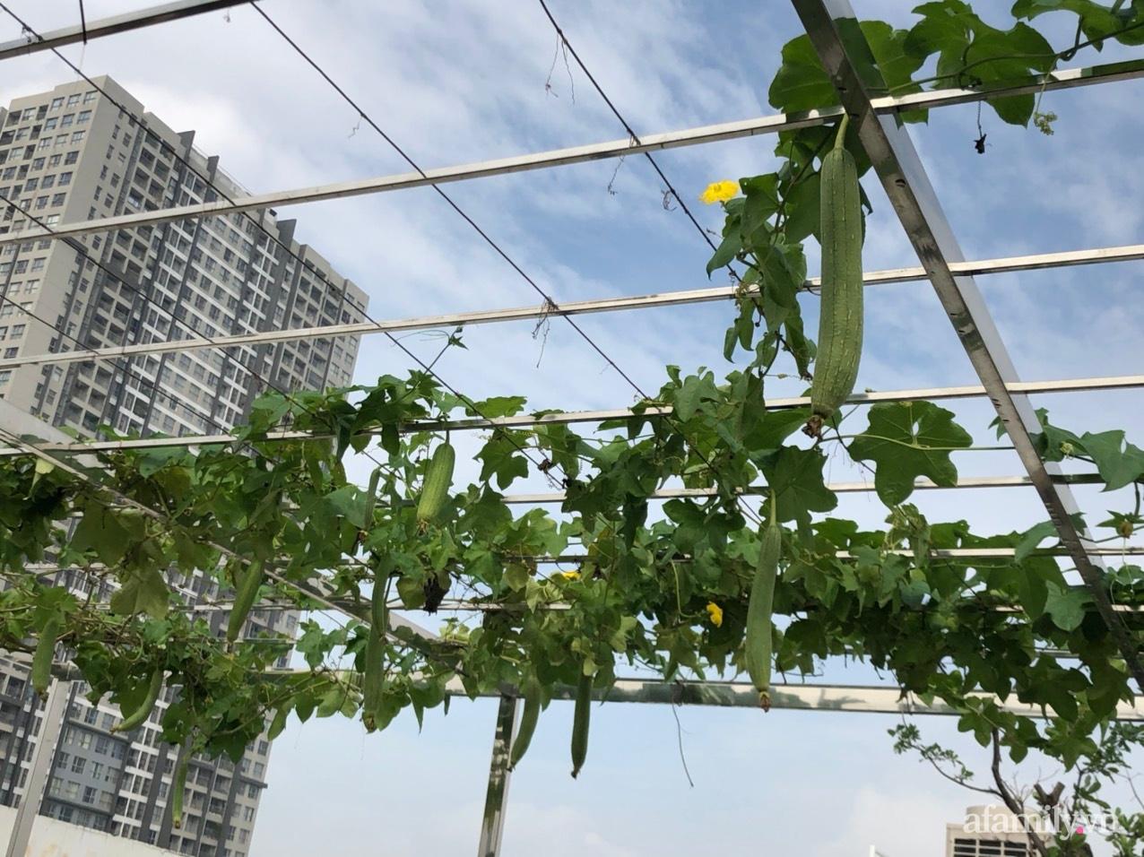 Vườn rau quả sạch 100m2 trên mái nhà của người phụ nữ xinh đẹp ở Hà Nội - Ảnh 9.