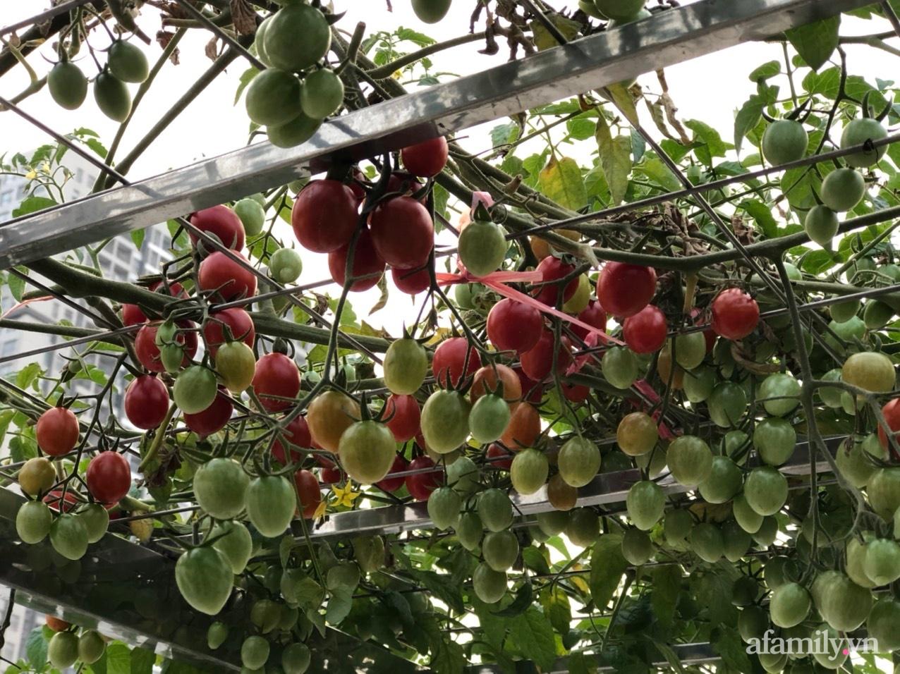 Vườn rau quả sạch 100m2 trên mái nhà của người phụ nữ xinh đẹp ở Hà Nội - Ảnh 6.