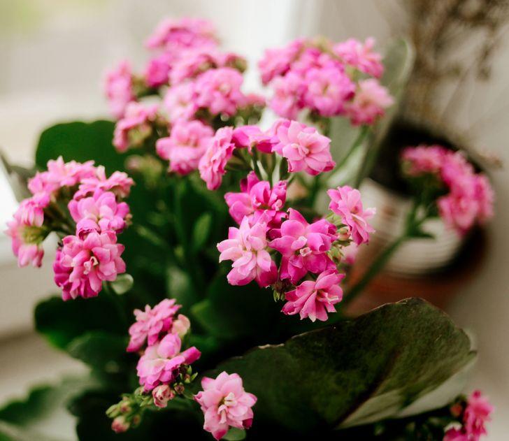Điểm danh các loại cây ít cần chăm sóc mang lại màu sắc cùng sức sống cho ngôi nhà của bạn - Ảnh 2.