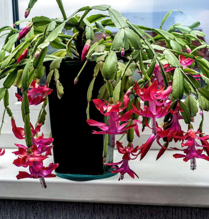 Điểm danh các loại cây ít cần chăm sóc mang lại màu sắc cùng sức sống cho ngôi nhà của bạn - Ảnh 6.